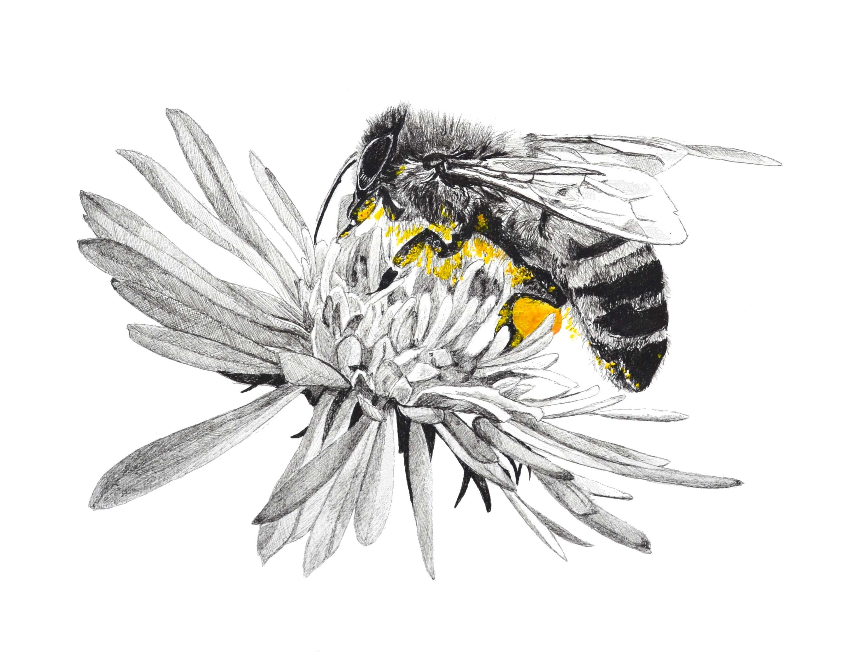 leyna-lowe-bee